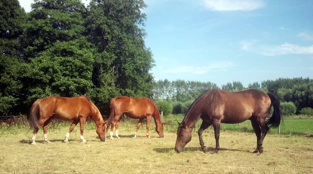 kudde van puurmeij paardencoaching