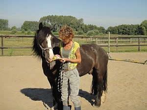 coachingssessie met paarden