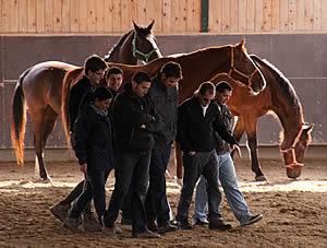 teambuilding en bedrijfscoaching met paarden