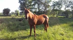 Paarden co-coach veulen Leah