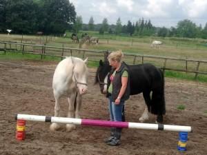kort coach traject met paarden