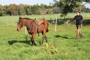 paardencoaching hengst jack